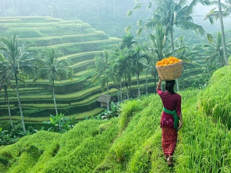 Ubud-Rice-Fields