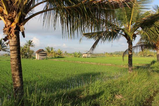 lily-lane-villas